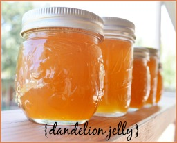 dandelion jelly*